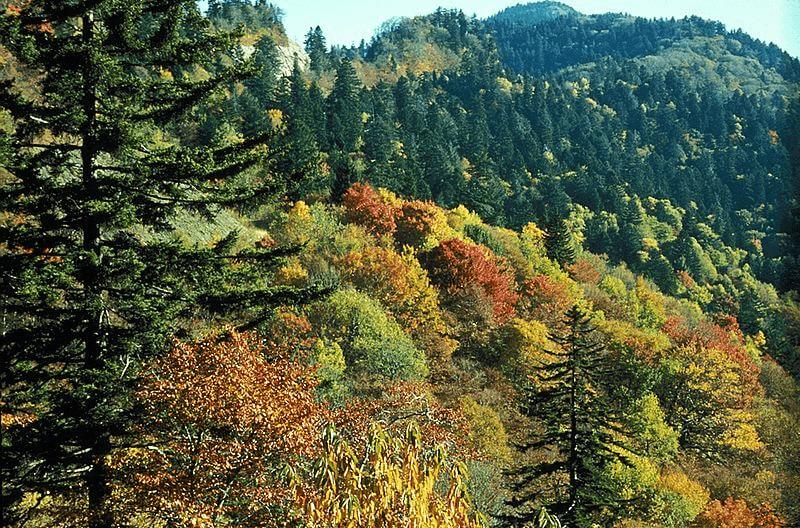 beautiful carolina mountain woods